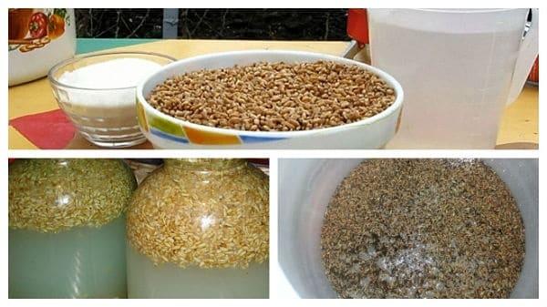 Пшеничная брага