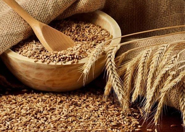 самогоноварение из пшеницы
