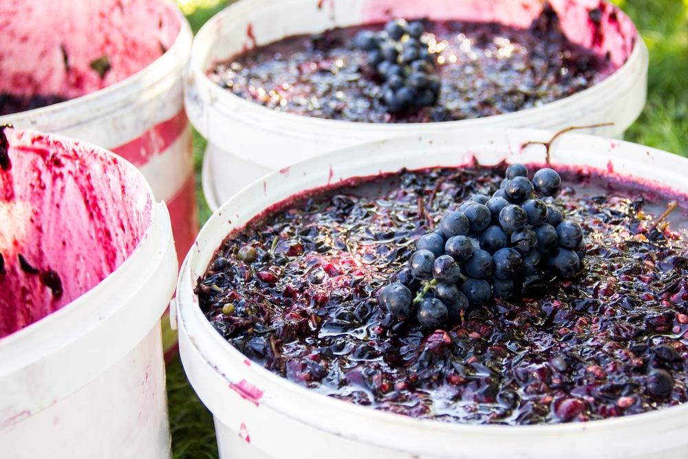 Брага из винограда для чачи