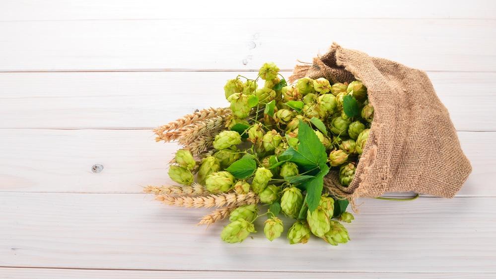 Рецепт браги из зеленого солода