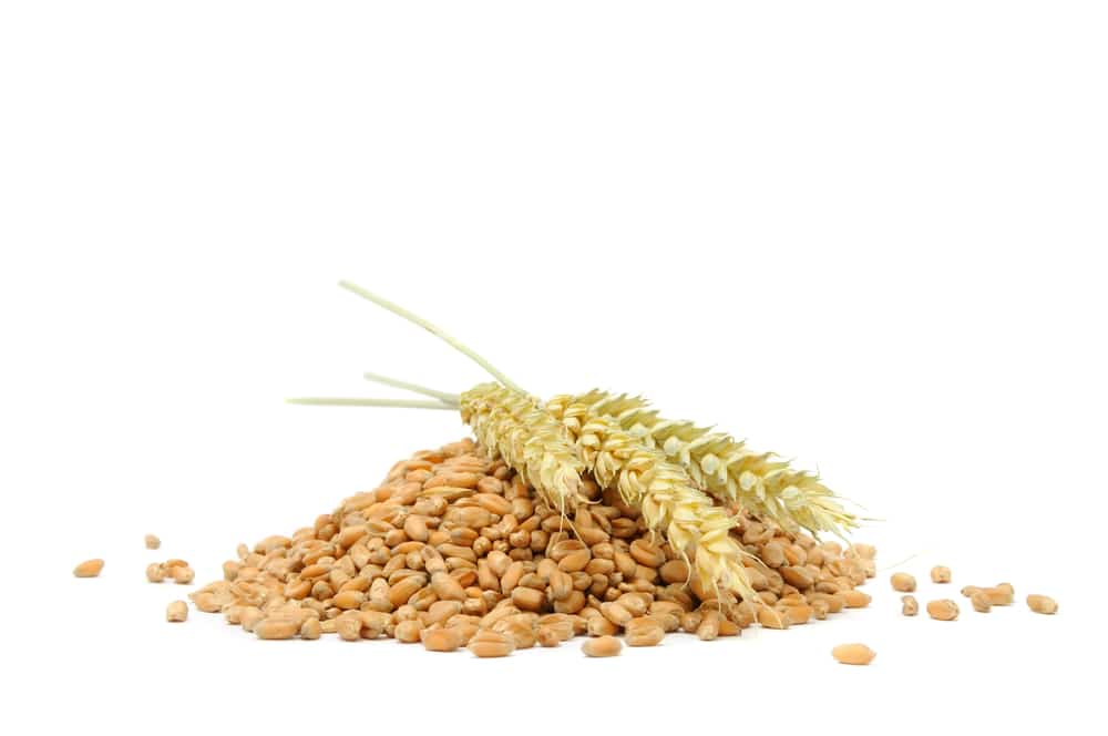Поставить брагу на пшенице