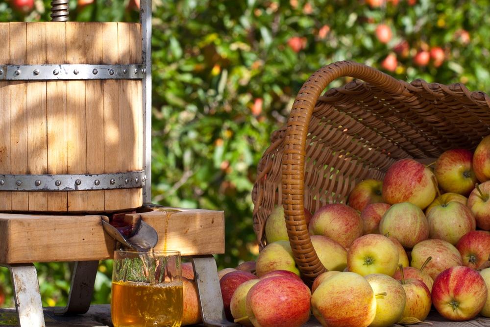 Брага из яблочного сока для самогона
