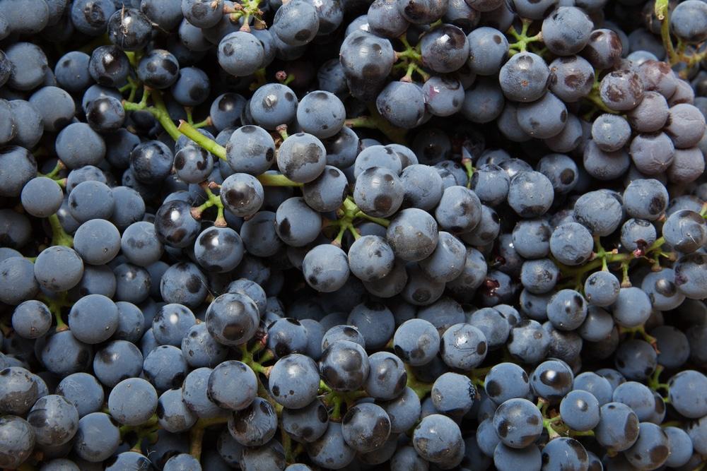 Коньяк из винограда в домашних условиях