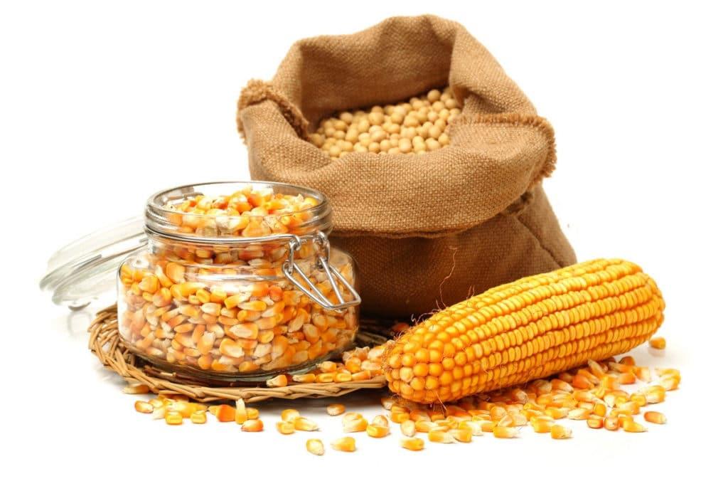 Как сделать кукурузный виски: подбираем правильную брагу