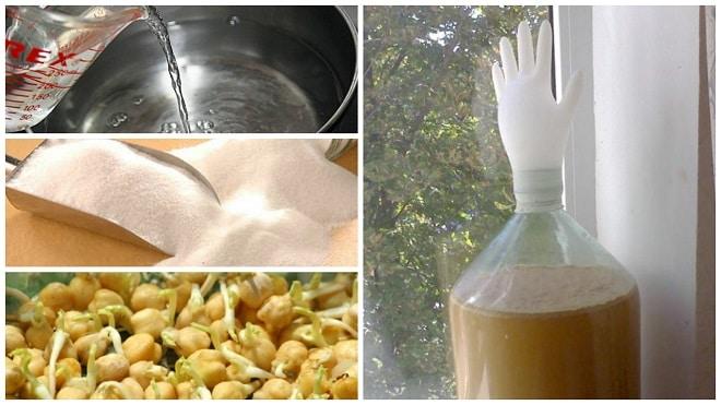 Сахарно-кукурузный самогон