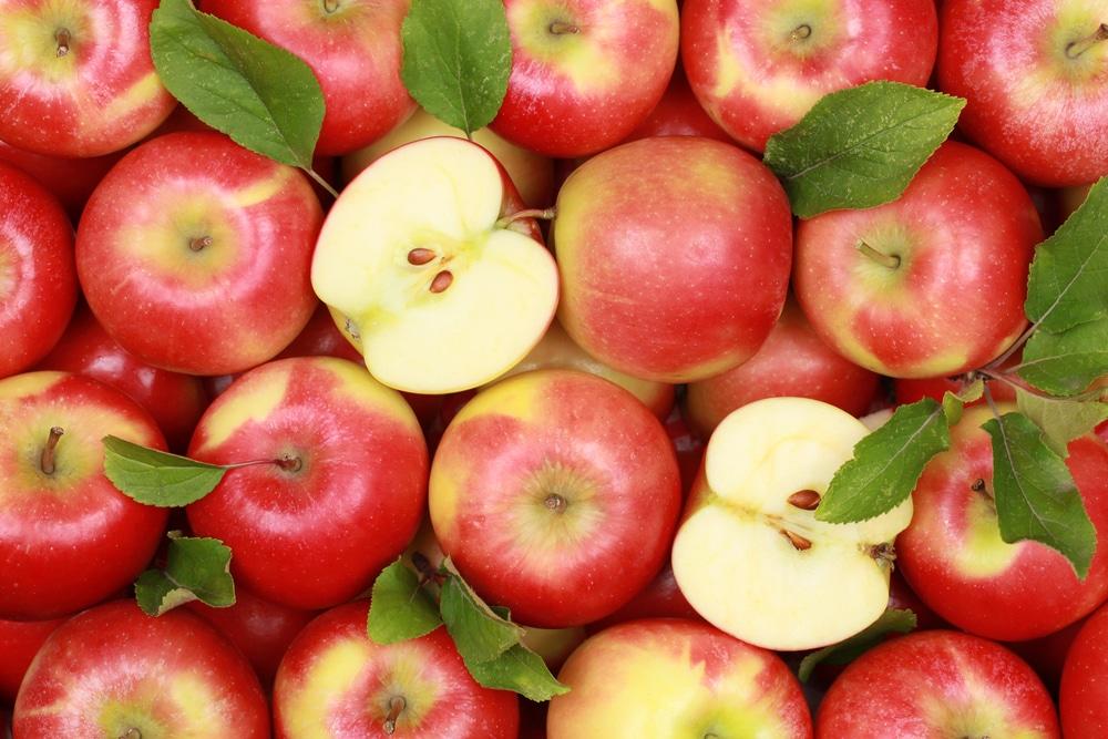 Рецепт браги из яблок