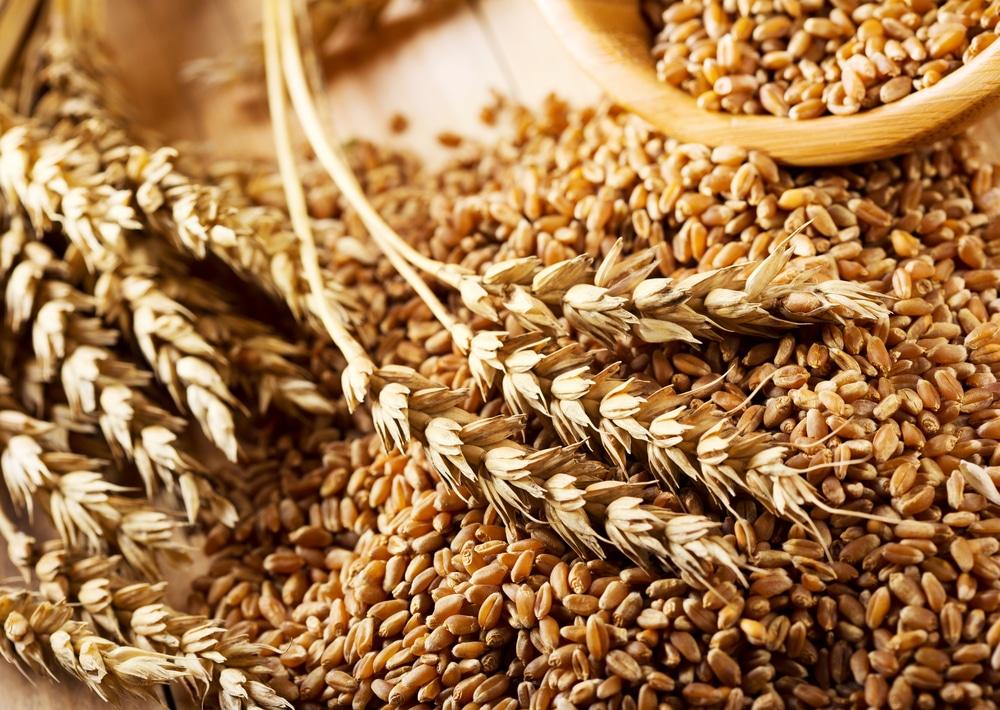Получение спирта из пшеницы