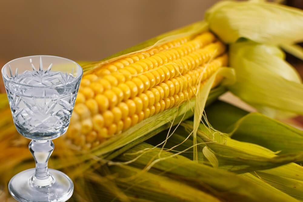Кукурузная брага: особенности использования